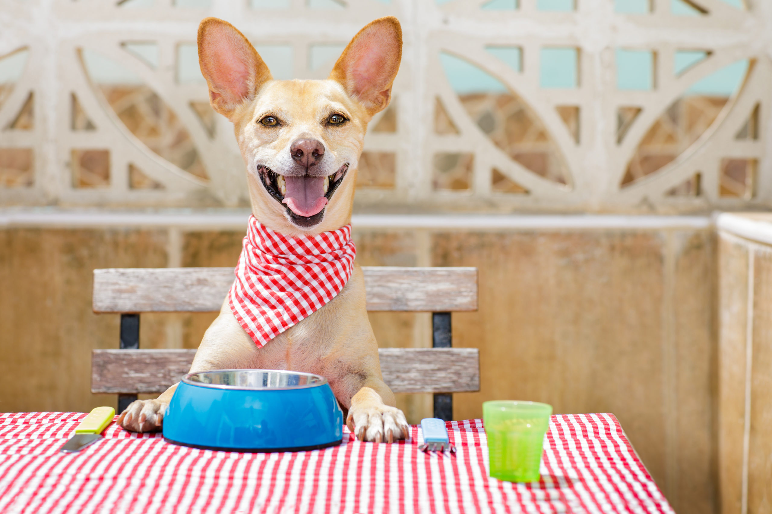 An Intro To Pet Food / Basic Guide to Different Feeding Methods