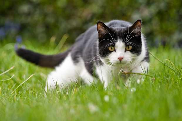 Feed Cats Like They Eat in the 'Wild'