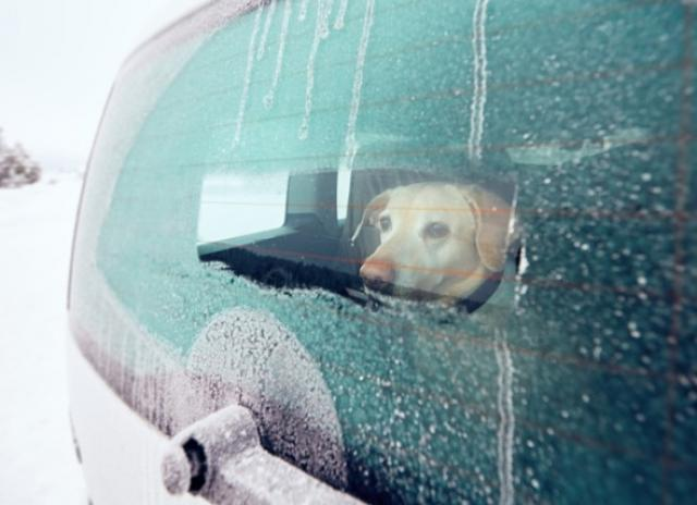 Cold Weather Safety Tips for Traveling With a Pet