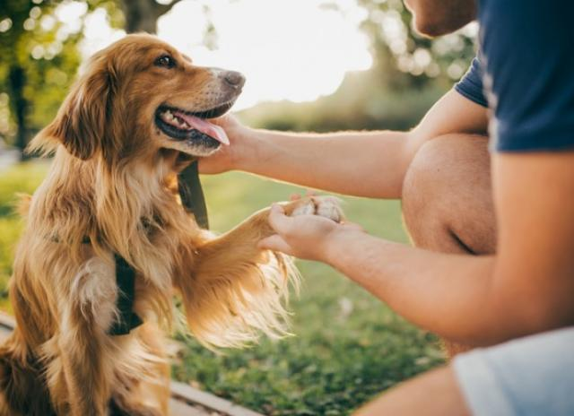 Probiotics for Dogs: Do They Work?