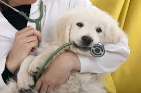 4 Things Pet Parents Do at Vet Appointments That Drive the Staff Nuts