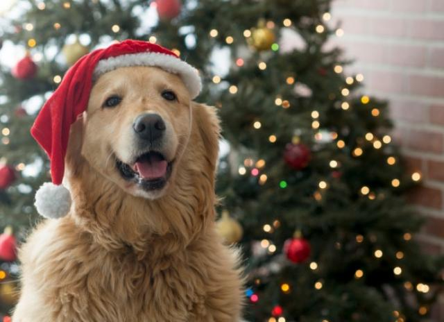 Christmas Tree Safety Tips For Pet Parents