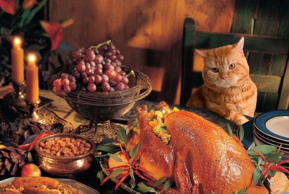 11 Holiday Food Scraps That Are Dangerous for Your Cat
